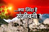 देखें: आज भी जिंदा है रामायण काल की संजीवनी बूटी?