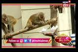 VIDEO: शूटिंग छोड़ कैसे बंदरों के साथ busy हैं सारे एक्टर