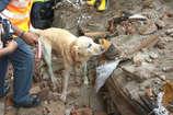 VIDEO: NDRF के जांबाज़ स्नीफर कुत्तों ने मलबे से बचाई 3 लोगों की जान