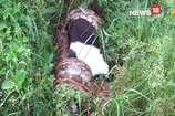 VIDEO : बकरी को निगलने ही वाला था अजगर, पुलिस ने ऐसे बचाई जान
