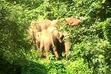 VIDEO: छत्तीसगढ़ में हाथियों का आतंक, 15 दिनों में 515 किसानों की फसल की तबाह