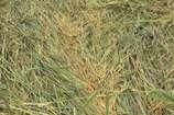 VIDEO: बारिश थमी, खिल आई धूप..लेकिन नहीं लौटी किसानों के चेहरे पर मुस्कान