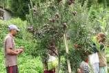 VIDEO: सेब उत्पादन बढ़ाने की नवीनतम जानकारियों से भरी है संजीव की पुस्तक