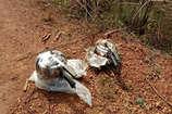 VIDEO: जवानों ने कोण्डागांव में दो कुकर बम किया डिफ्यूज