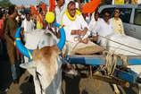 महानदी बचाने के लिए पूर्व कृषि मंत्री चंद्रशेखर साहू ने नदी का जल लेकर की बैलगाड़ी यात्रा