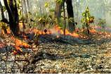 VIDEO: मुंगेली के अचानकमार टाइगर रिजर्व में फैली आग