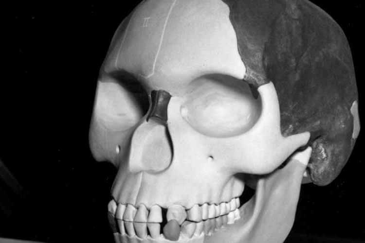 पिल्टडाउन मैनः चार्ल्स डॉसन नाम के झूठे वैज्ञानिक ने 48 साल की उम्र में पिल्टडाउन मैन का सिद्धांत दिया, जिसमें दावा किया गया कि उन्होंने पांच लाख साल पुराने कंकाल खोजे हैं। उस वक्त नैचुरल हिस्ट्री म्यूजियम ने भी उनका डंका पीटा और कहा कि यह मानव उद्भव की दिशा में बड़ी खोज है। 1912 में पिल्टडाउन मैन सिद्धांत आया था, जिसमें पांच लाख साल पुरानी हड्डियों के मिलने का दावा किया गया। बाद में पता चला कि चिंपैंजी के जबड़े में अलग से मानव खोपड़ी फिट करके स्वांग भरा गया। मामले का खुलासा 1953 में हुआ था। इस धोखाधड़ी को वैज्ञानिक 40 साल के समय की बर्बादी मानते हैं।