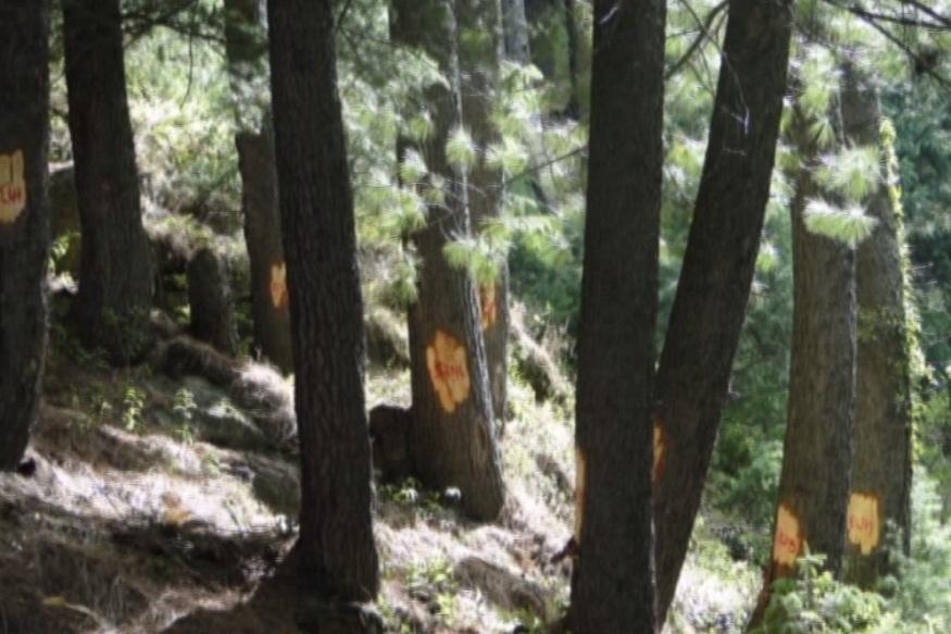 VIDEO : पेड़ कटेंगे तो लगेंगे कहां, बस इतना-सा सवाल है