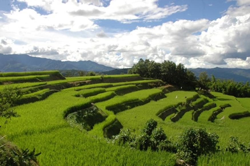 नगालैंड मूलत: कृषि प्रधान राज्य है. लगभग 70 प्रतिशत जनता कृषि पर निर्भर है. राज्य में कृषि क्षेत्र का महत्वपूर्ण योगदान है. चावल यहां का मुख्य भोजन है. कुल कृषि योग्य क्षेत्र के 70 प्रतिशत में धान की खेती होती है और राज्य के कुल खाद्यान्न उत्पादन का 75 प्रतिशत चावल है. यहां मुख्यत: 'स्लेश और 'बर्न' खेती प्रचलित है, जिसे स्थानीय तौर पर 'झूम' के नाम से जाना जाता है.