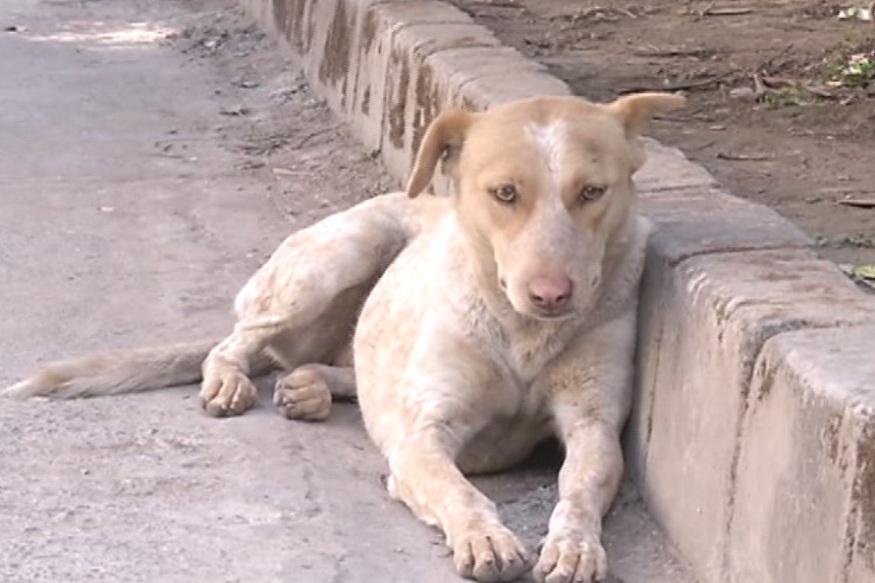 Image result for घर ले बहार सड़क का कुत्ता दिखे