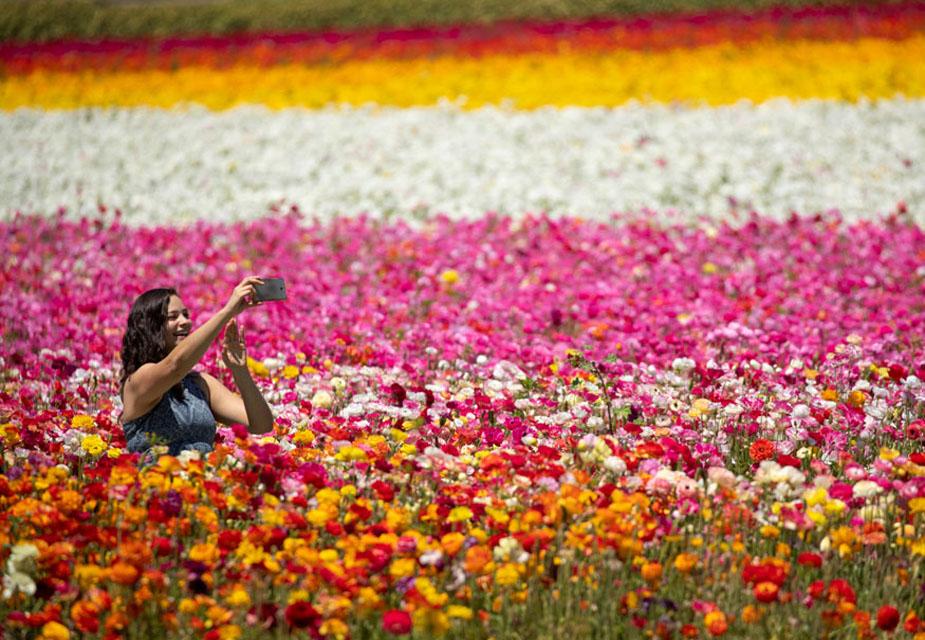 कार्ल्सबैड बगीचे में हज़ारों खिले फूलों के बीच सेल्फी लेती लड़की की ये तस्वीर है.(image credit: Reuters)