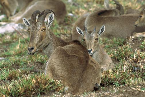 मुन्नार में वन्य जीवन को बेहद करीब से देखा जा सकता है. इरावीकुलम नेशनल पार्क यहां की खूबसूरत जगहों में शुमार है. मुन्नार से 15 किलोमीटर दूर बने इस पार्क का निर्माण नीलगिरी जंगली बकरों को बचाने के लिए किया गया था. 1978 में इसे राष्ट्रीय उद्यान घोषित कर दिया गया.