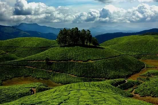 मुन्नार से 38 किलोमीटर दूर बना यह कोल्लुकुमल्ले चाय बागान देश में सबसे ऊंचाई पर स्थित चाय बागान है. बेहतरीन जलवायु के कारण यहां देश की सबसे बेहतरीन चाय की पैदावार होती है. यहां पहुंचने के लिए आपको जीप का सहारा लेना पड़ेगा.