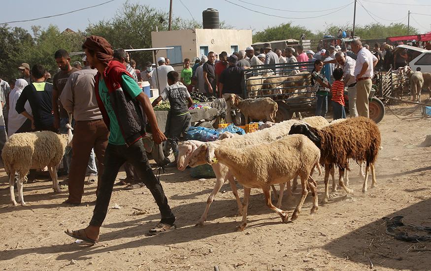 गाजा पट्टी में अपनी भेड़ों को बेचने के लिए ले जाता एक शख्स.