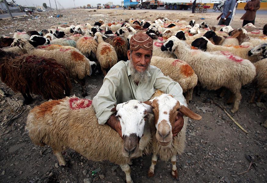 कराची में एक अफगानी अपने बकरों को बेचते हुए.