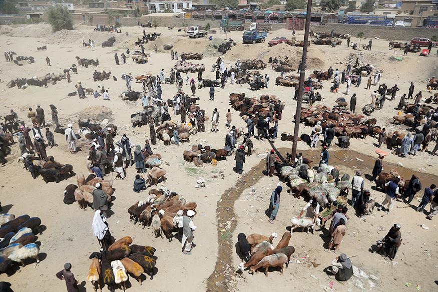 अफगानिस्तान में काबुल में जानवरों का बड़ा बाजार.