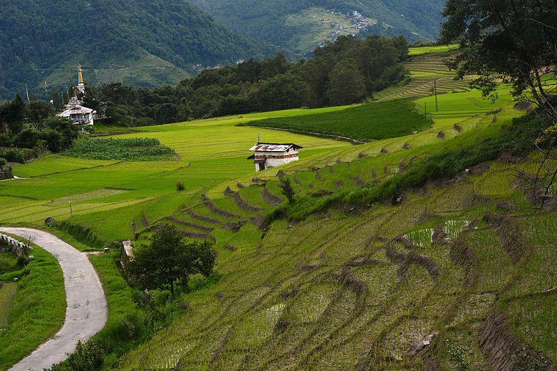 7- ज़ीरो- अगर आपका मन उत्तर पूर्वी राज्यों को घूमने का है तो आपको अरुणाचल प्रदेश जाना चाहिए और ज़ीरो घूमना चाहिए यहां सबसे पुरानी जनजातियों के लोग आपको दिखेंगे.