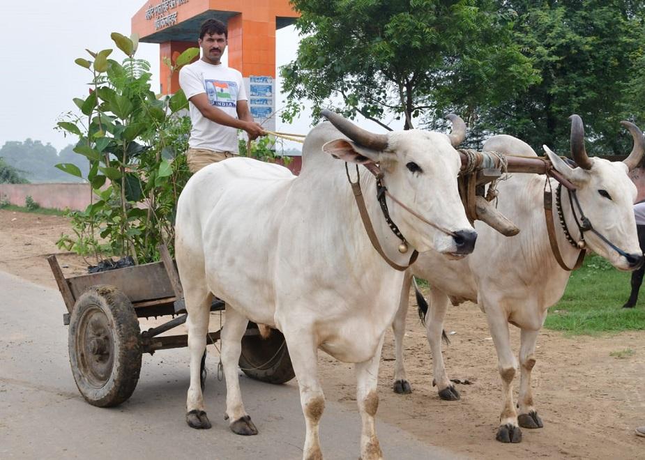 देवेंद्र ने सिर्फ सोनीपत ही नहीं बल्कि दिल्ली, यूपी,पंजाब और चंडीगढ़ में भी इस पहल को आगे बढ़ाया. अपनी आधी सैलरी ये ट्रीमैन पर्यावरण के लिए खर्च करता है.