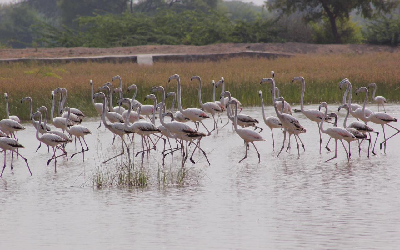 अगर आप ट्राइबल सफारी के शौकीन हैं तो दक्षिण जोधपुर से मात्र 40 मिनट की दूरी पर बसे जनजातीय गांव विश्नोई विलेज एक बेहतर विकल्प हो सकता है. यहां खेजड़ी के पेड़ों से घिरे इस गांव में हिरन और चिंकारा देखे जा सकते है. गुडा झील यहां का प्रमुख आकर्षण है, कई तरह के पक्षियों का डेरा है.