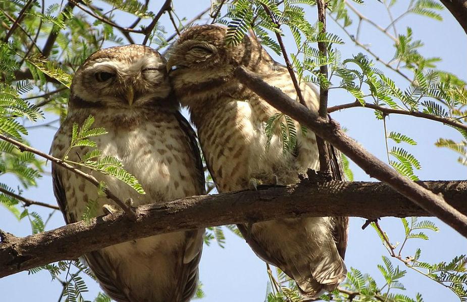 ओसला भरतपुर पक्षी विहार: यह दुनिया के सबसे बड़े पक्षी विहार में से एक है. यह केवलादेव राष्ट्रीय उद्यान के नाम से भी विख्यात है. यह पक्षी विहार राजस्थान में है. यहां सैलानी कई दुर्लभ और विलुप हो चुके पक्षियों को परवाज करते हुए देख सकते हैं.