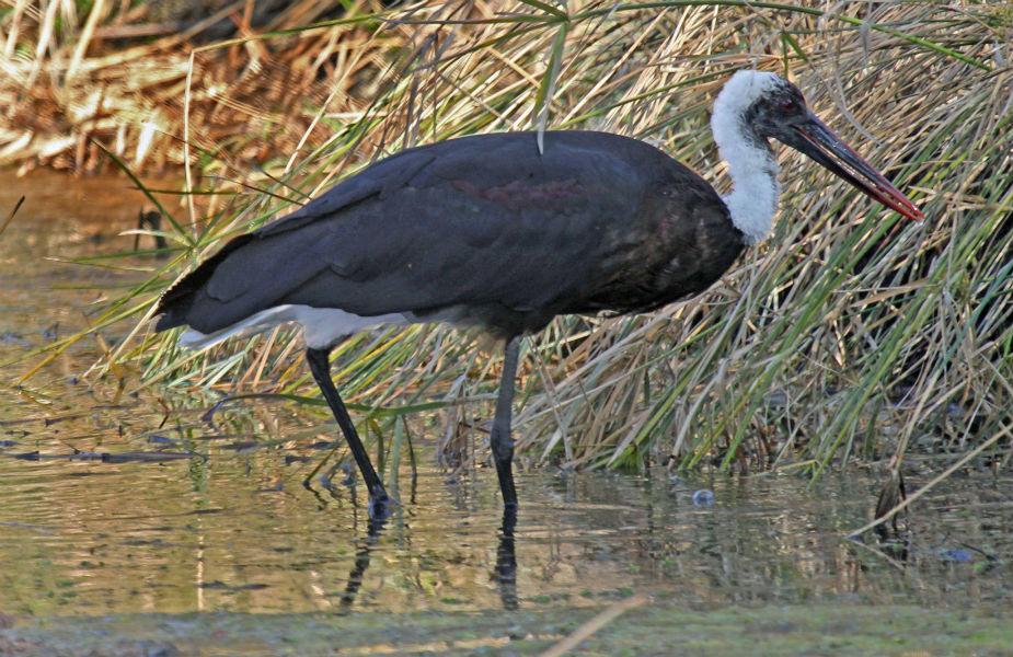 सुल्तानपुर पक्षी विहार: यह भारत के प्रमुख अभ्यारणों में गिना जाता है. यह दिल्ली के धौलाकुआं से महज 40 किलोमीटर दूर है.