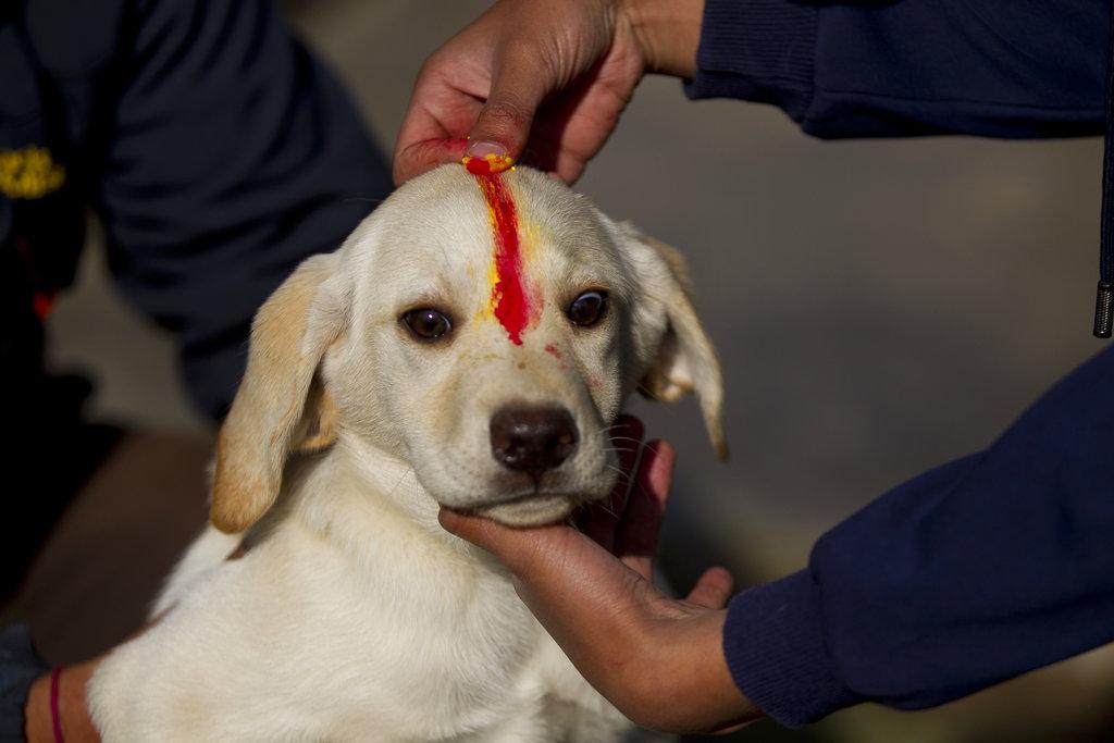 नेपाल में भारत की तरह दिवाली का त्यौहार पांच दिन तक मनाया जाता है. जिसमें एक दिन कुकुर तिहार नाम का त्योहार होता है. जिसमें कुत्तों का पूजा होती है.