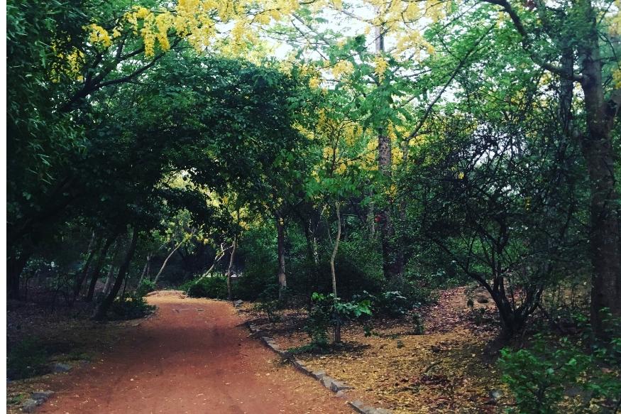 देश की राजधानी दिल्ली में भी एक जगह ऐसी है, जहां जाना मना है इस तरह की कुछ अजीबो-गरीब हरकते होती हैं. वसंत कुंज और महरौली के पास स्थित संजय वन एक घना जंगल है. लोगों का कहना है कि इस जंगल में अक्सर रात के कुछ अजीबो-गरीब हरकत होती है.