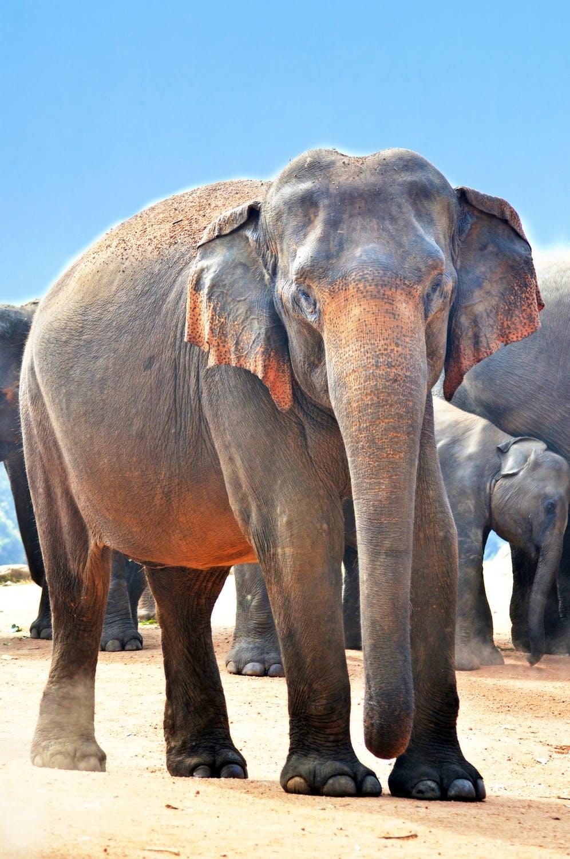 ऐसा देखा गया है कि पियानो की धुन सुनकर हाथी आराम से खड़े हो जाते हैं और संगीत सुनते हैं.