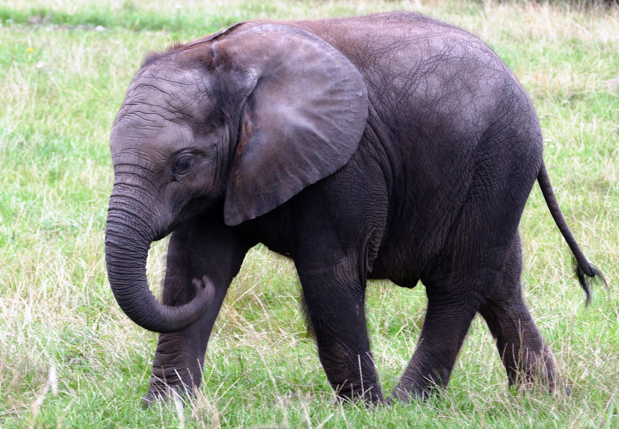 <br />बता दें कि इस एलीफेंट वर्ल्ड को रिटायरमेंट सेंचुरी भी कहा जाता है. ऐसा इसलिए क्योंकि यहां बूढ़े-बूढ़े हाथी काफी हैं वो असहाय हो चुके हैं. उनकी देखभाल काफी अच्छे से की जाती है.