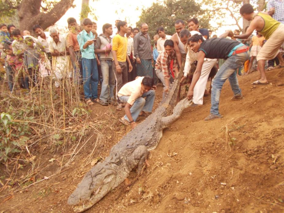 बेमेतरा जिले के ग्राम बाबा मोहतरा में एक मगरमच्छ को लोगों ने अपना दोस्त मान लिया था. लोगों ने इसका नाम गंगाराम रखा था. लेकिन बीते मंगलवार इस मगरमच्छ की मौत हो गई.