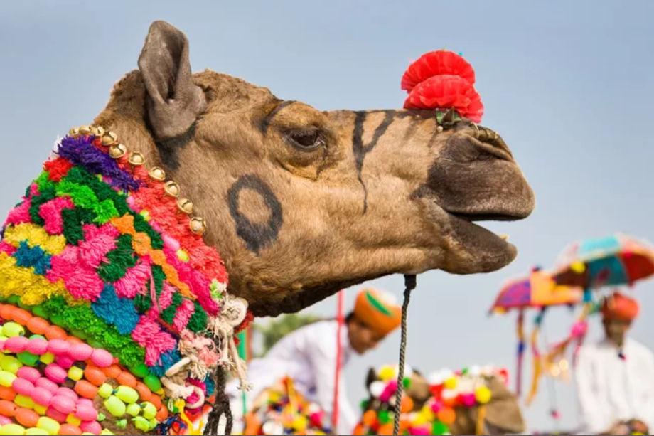 देशी-विदेशी पर्यटकों के मध्य रस्साकस्सी, कबड्डी, कुश्ती, मटका दौड़और साफा बांध आदिखेलकूद प्रतियोगिताओं का आयोजन किया जाएगा.