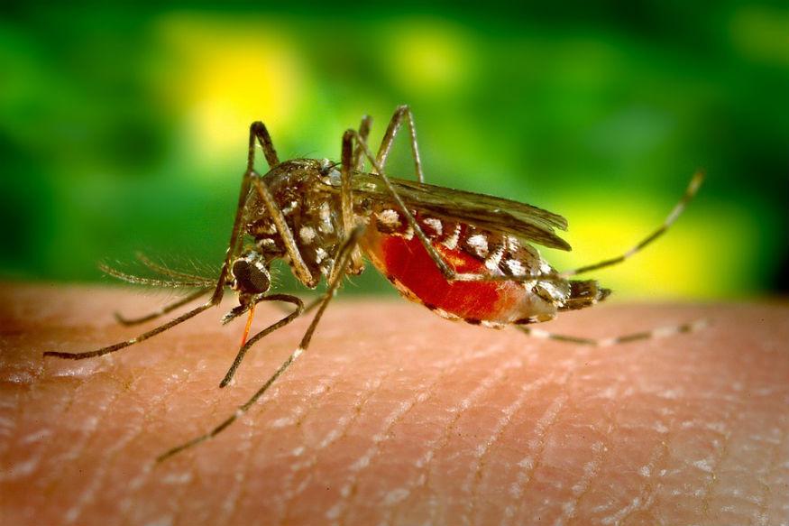मच्छरों के काटने की वजह से कई जानलेवा बीमारियां होती है और सालभर में कई लोगों की मौत भी हो जाती है. मच्छरों के काटने से मलेरिया, डेंगू बुखार, जीका जैसी गंभीर बीमारियां होती हैं. अगर सही समय पर उपचार न लिया गया तो लोगों की जान जा सकती है. लोग अक्सर मच्छरों से निजात पाने के लिए घरों में रिफिल और मशीन का प्रयोग करते हैं.