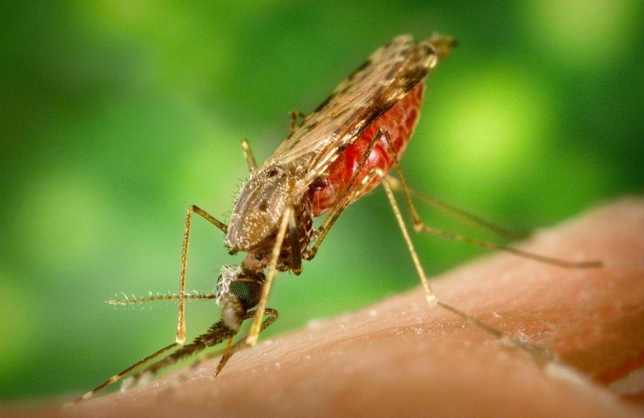 वहीं, एल्कॉहोल से बना रेप्लेंट भी मच्छरों पर काफी असरकारक होता है. इसकी महक से मच्छर दूर भागते हैं.