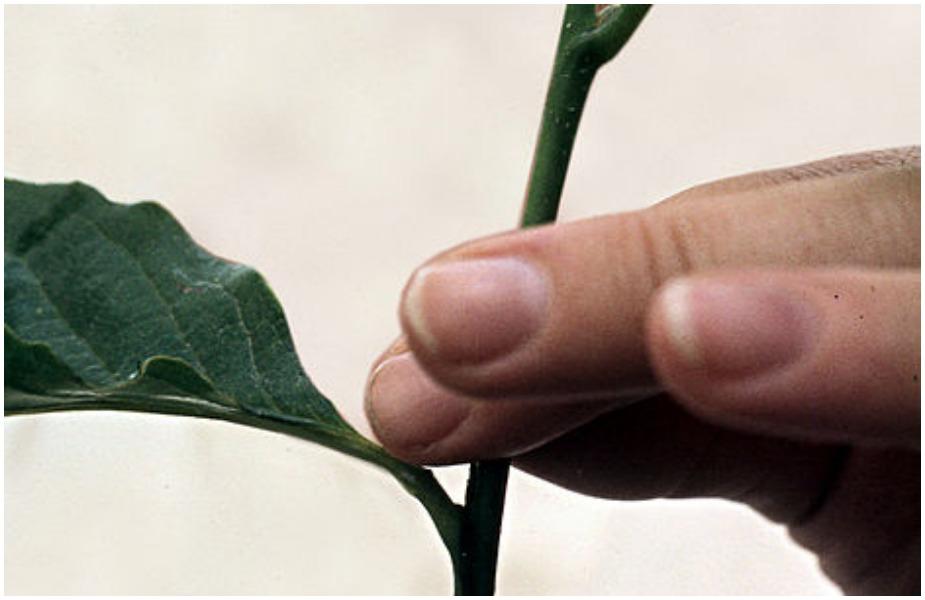 मकर संक्रांति के दिन फूल नहीं तोड़ने चाहिए. साथ ही पेड़-पौधों की कटाई-छंटाई भी नहीं करनी चाहिए.