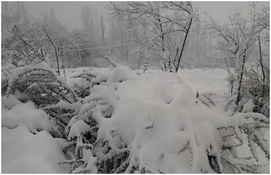 कश्मीर में जहां बुधवार को तापमान -3 डिग्री सेल्सियस था वहीं गुरुवार जो बर्फ़बारी और बारिश के कारण -0.3 डिग्री सेल्सियस हो गया.