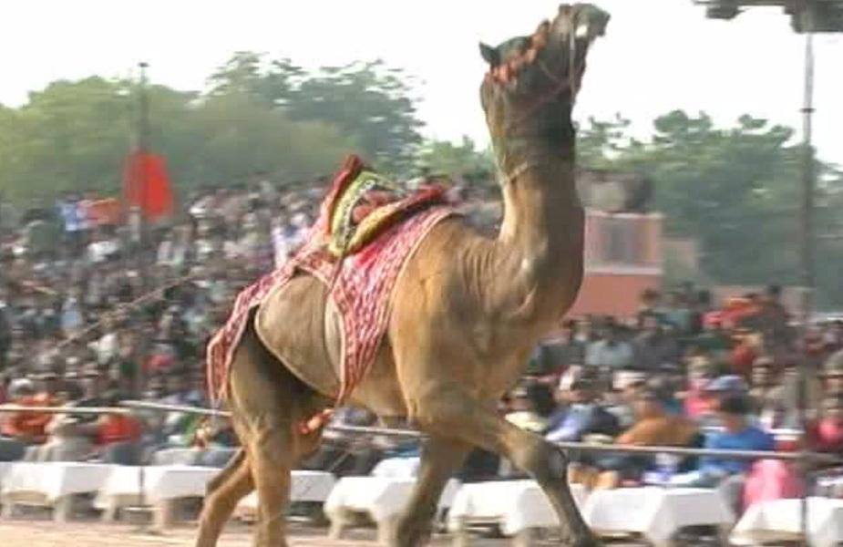 बीकानेर के कर्णी सिंह स्टेडियम में आयोजित होने वाले इस ऊंट उत्सव की शुरुआत रायसर के रेतीले धोरो में व कैमल रन के साथ होगी.
