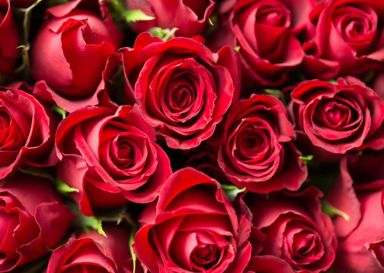 रोज़ डे सिर्फ दो प्रेमियों के लिए ही नहीं होता. ये दोस्त और परिवार वालों के लिए भी होता है. इस दिन आप अपनी भावनाओं को एक-दूसरे के सामने बयां कर सकते हैं. किस व्यक्ति को कौन-सा गुलाब देना चाहिए, ये बात अपने आप में अलग है. क्योंकि हर किसी को आप लाल गुलाब नहीं दे सकते हैं. इसलिए आज हम आपको व्यक्ति और रिश्ते के अनुसार गुलाब के रंगों का महत्व बताने जा रहे हैं. हर गुलाब के रंग में अलग भावनाएं जो जुड़ी होती हैं.