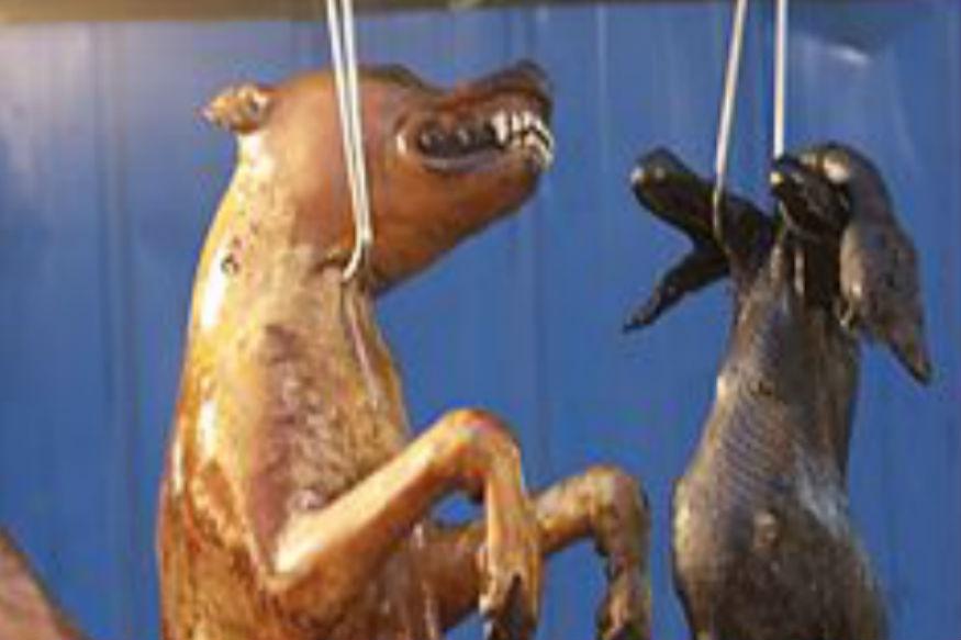 डॉग मीट फेस्टिवल की आलोचना एनिमल वेल्फेयर और पशु अधिकार समर्थकों ने की थी. कुत्ते का मांस खाने की परंपरा चीन में 4,000 साल पहले शुरू हुई थी.यहां के लोक चिकित्सकों का मानना था, कुत्ते का मांस गर्मी में खाना शरीर की गर्मी दूर करने में मदद करेगा.(सभी तस्वीरें- सांकेतिक)