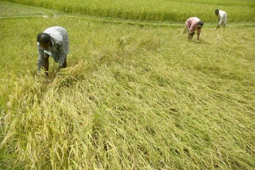 farmer, kisan, DBT, Bank, direct benefit transfer scheme, aadhaar, pradhanmantri kisan samman nidhi scheme, bjp, narendra modi, PM-Kisan, benefit, ministry of agriculture, farm loan, किसान, डीबीटी, बैंक, डायरेक्ट बेनिफिट ट्रांसफर, आधार, प्रधानमंत्री किसान सम्मान निधि, बीजेपी, नरेंद्र मोदी, पीएम-किसान, कृषि मंत्रालय, कृषि ऋण, लोकसभा चुनाव, loksabha election 2019, gajendra singh shekhawat, गजेंद्र सिंह शेखावत, Uttar Pradesh, Himachal Pradesh, उत्तर प्रदेश, हिमाचल प्रदेश
