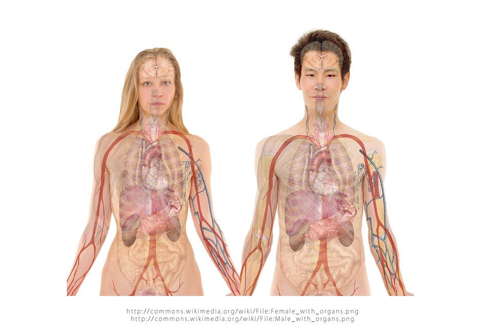किडनी जिन वेस्ट प्रोडक्ट को बाहर करती है उन्हें विज्ञान की भाषा में क्रिएटिनिन और यूरिया कहा जाता है. मेटाबोलिज्म प्रकिया के दौरान भोजन को ऊर्जा में बदलने के दौरान क्रिएटीन पदार्थ बनता है. यह टूटकर क्रिएटिनिन में बदलता है. फिर गुर्दे इसे खून से छानकर यूरिन के ज़रिए शरीर से बाहर निकालते हैं.