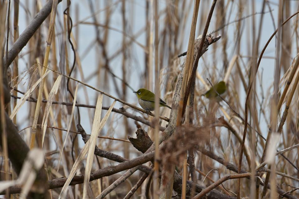 chickadees नाम की पक्षी भी मौसम ठंडा होने पर खुद पर मोटी इन्सुलेशन परत बनाने के लिए रोए खड़े कर लेते हैं. ठंडे मौसम में ये ज्यादा भोजन खाते हैं ताकि शरीर में गर्मी पैदा हो सके.(सभी तस्वीरें: सांकेतिक)