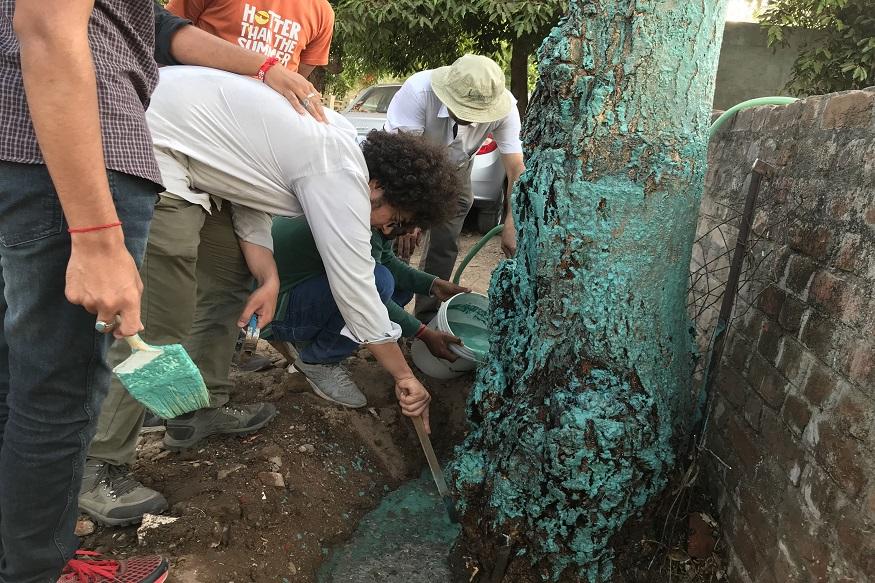 पेड़ों को बचाने के इस मिशन में फिलहाल वीएनसी के साथ 15 लेग जुड़े हैं. धवल कहते हैं, जिस भी पेड़ पर फंगल अटैक का खतरा दिखता है हम उसके आस पास के एरिया को खोद कर पेड़ के तने और उसके जड़ों में ये बोरडो मिश्रण लगा देते हैं.