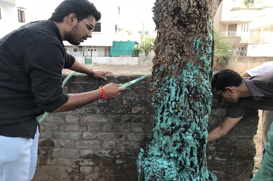 इस समस्या के लिए हमने एक एक्सपेरिमेंट किया और इस तरह के पेड़ों के लिए बोरडो मिश्रण तैयार किया. बोरडो मिश्रण कॉपर सलफेट, लाइम और पानी से तैयार किया जाता है. हमारा एक्सपेरिमेंट सफल रहा और सभी पेड़ वापस ठीक हो गए. इसी तरह हमने इलाके के सभी पेड़ों को इस मिश्रण से वापस हष्ट पुष्ट कर दिया.