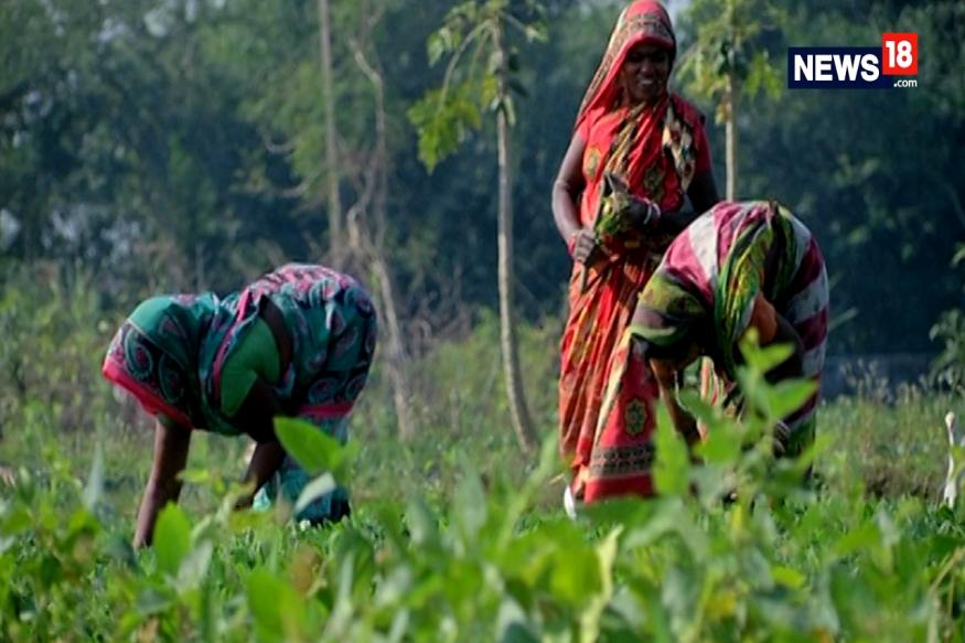 farmer, kisan, pradhan mantri kisan samman nidhi scheme, Modi Government, agriculture, farmer welfare, Doubling of Farmers Income, agriculture loan waiver, debt relief scheme for former, किसान, प्रधानमंत्री किसान सम्मान निधि योजना, मोदी सरकार, कृषि, किसान कल्याण, किसानों की आय दोगुनी, कृषि कर्जमाफी, narendra modi, नरेंद्र मोदी, PM-Kisan, पीएम-किसान, beneficiary list of PM-Kisan, पीएम किसान निधि के लाभार्थियों की सूची