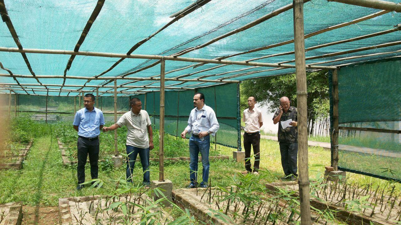 modi government schemes for Farmers, किसानों के लिए मोदी सरकार की स्कीम, benefits of bamboo farming, बांस की खेती के फायदे, कैसे करें बांस की खेती, Farmer, किसान, kisan, narendra modi, नरेंद्र मोदी, pm modi, पीएम मोदी, scheme for farmers, किसानों की योजनाएं, Ministry of Agriculture, कृषि मंत्रालय, National Bamboo Mission Scheme Contact, नेशनल बैंबू मिशन कांटैक्ट