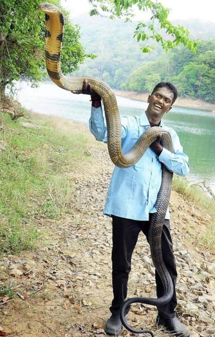 वहीं, मयूभंज जिले के जंगल भी एक शखस् को 19 का कोबरा मिला था. घर के मालिक ने जब झुककर देखा तो उसके होश उड़ गए. बालीपाल गांव के रूहिया सिंह जब घर के अंदर बेड पर लेटे थे तो उनको नीचे छिपा हुआ सांप दिखाई दिया. वो तुरंत घर के बाहर निकले और गांव के लोगों को बुला लिया. जिसके बाद सांप को पकड़ा गया.