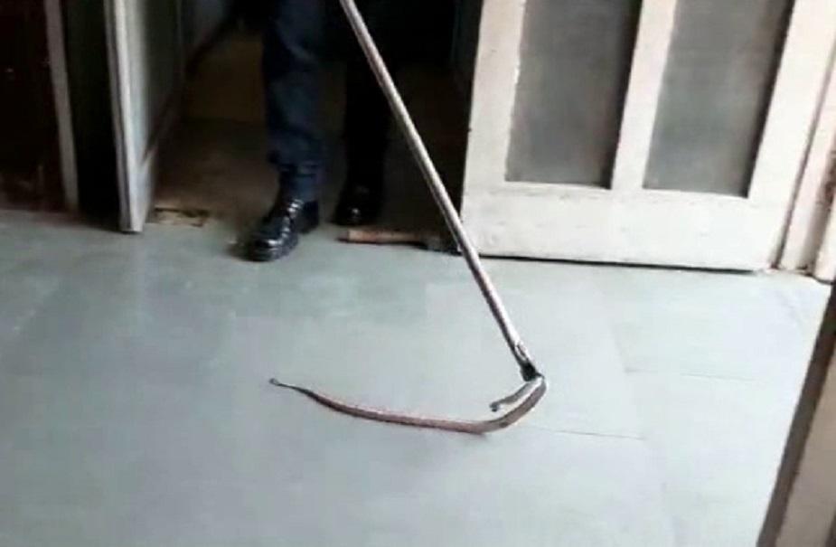 सांप को पकड़ कर सुरक्षित स्थान पर छोड़ दिया गया है. बता दे कि कुछ दिनों पहले ही इस अस्पताल में एक गोह निकली थी.