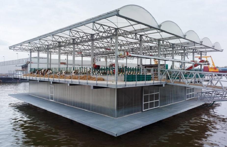 नीदरलैंड्स के रोटरडम में दुनिया का पहला तैरता हुआ डेयरी फार्म शुरू हो गया है. बंदरगाह पर बने इस दो मंजिला डेयरी फार्म में एक साथ 40 गाय को रखा जा सकता है. फिलहाल यहां 35 गायों को रखा गया है. इनसे हर दिन 800 लीटर का उत्पादन किया जा रहा है.