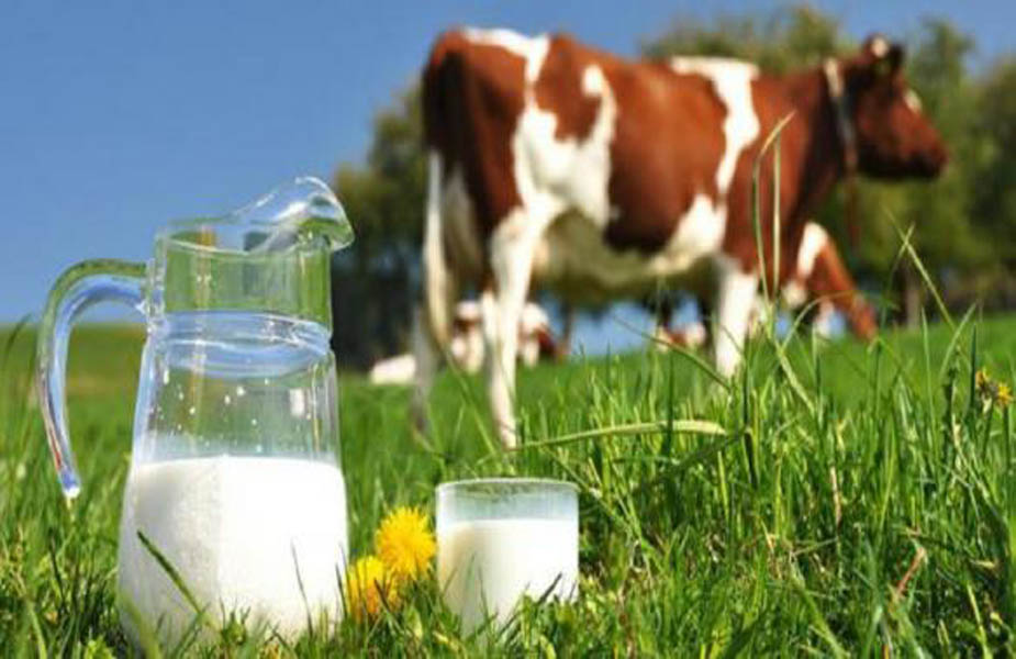 महंगाई के इस दौर में जहां पानी भी मुफ्त में नहीं मिलता वहीं अजब-गजब एमपी में एक ऐसा गांव भी है जहां मुफ्त में दूध मिलता है.