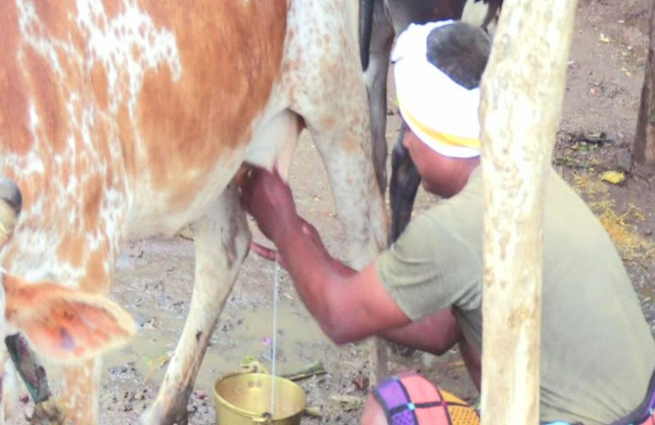 बैतूल के चूड़िया गाँव में मुफ्त में दूध मिलता है और वो भी जितना चाहे उतना क्योंकि इस गाँव मे सालों से दूध बेचना प्रतिबंधित है.